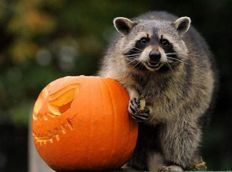 31 октября Halloween в контактном зоопарке «Лесное посольство» уфа