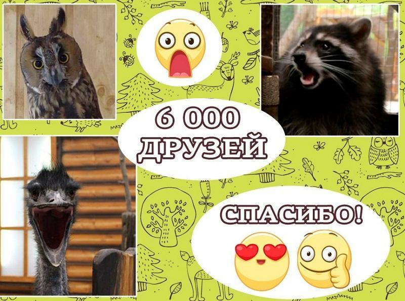 В нашей группе Вконтакте уже более 6 000 участников!