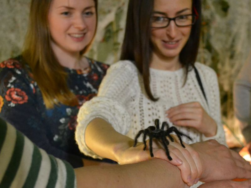 Выставка пауков-птицеедов «Ведьмина кухня» в контактном зоопарке Лесное Посольство