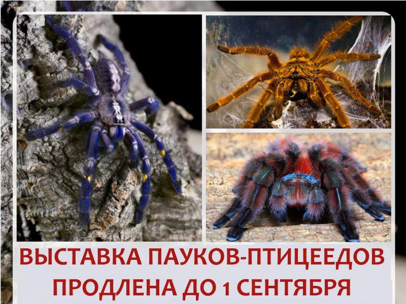 """Выставка пауков-птицеедов """"Ведьмина кухня"""" в контактном зоопарке Лесное посольство"""