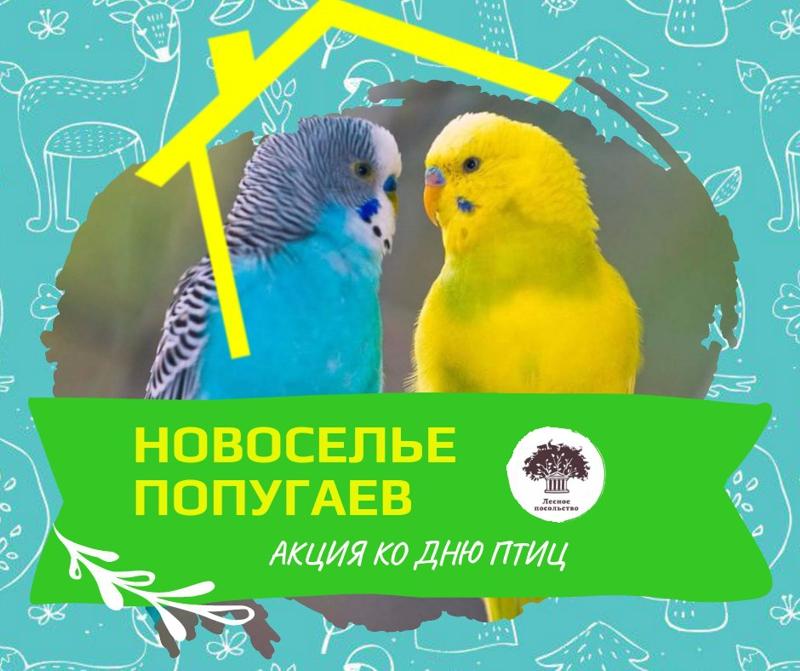 День птиц в Лесном Посольстве