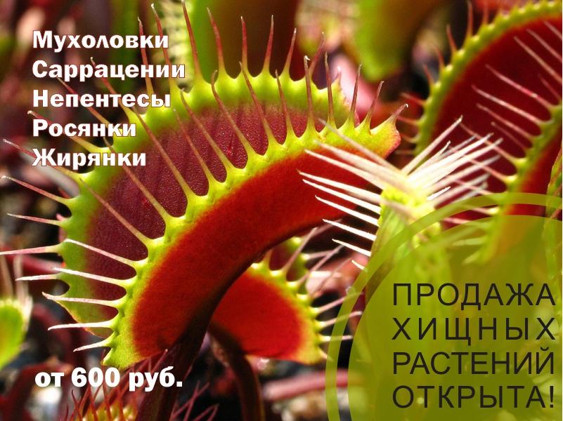 Купить хищные растения спб