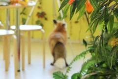 Место для мастер-классов и прогулок лисы