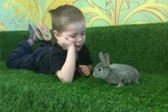 Детский сад для кроликов