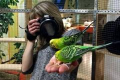 Гадание на попугайчиках